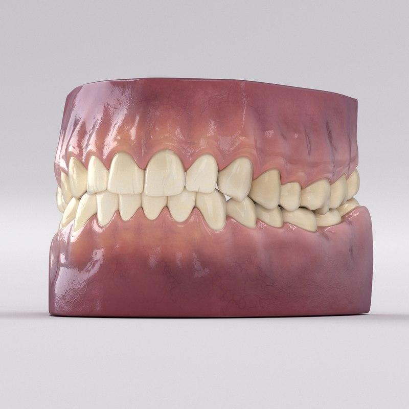 realistic teeth 3D model