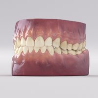realistic teeth 3D model
