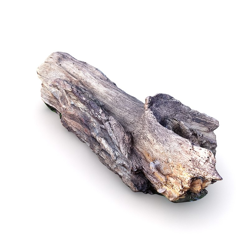 scan tree trunk 3D