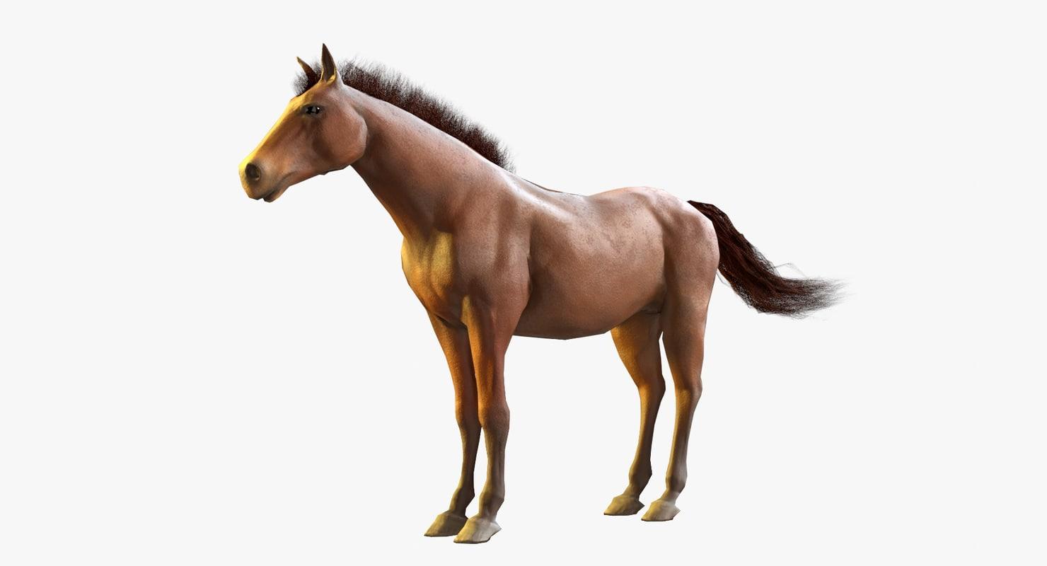 horse blender hairs 3D model