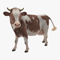 3D red white cow fur