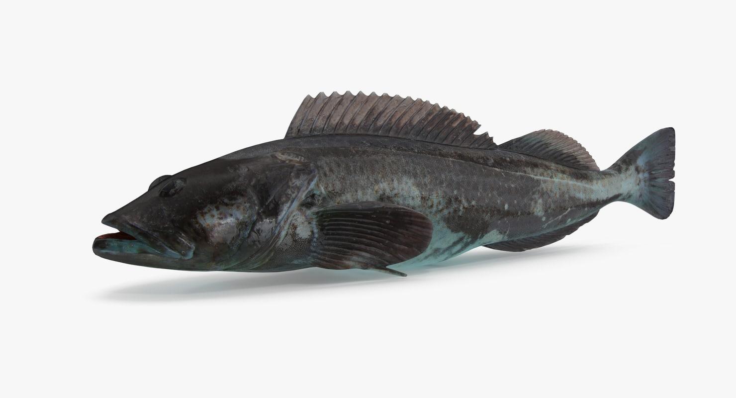3D lingcod ling cod
