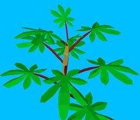 Small Cassava Plant