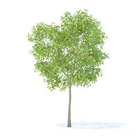 3D pear tree 3 7m