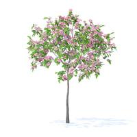 plum tree 2m 3D