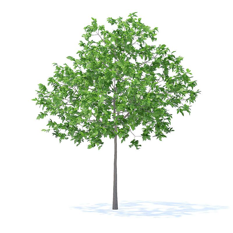 3D plum tree 3 2m model