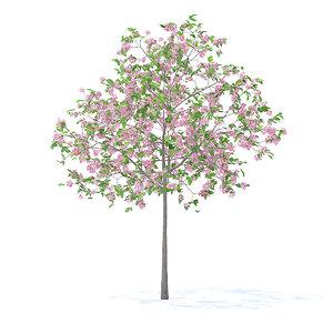 3D model plum tree 3 2m