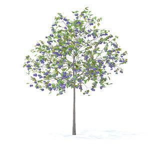 3D plum tree 3 2m