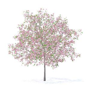 3D plum tree 5 2m model