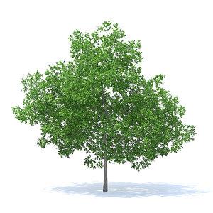 3D plum tree 7 1m