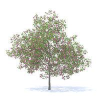 3D model plum tree 7 1m
