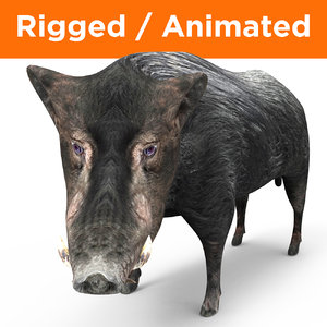 3D wild boar rigged animation