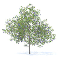 plum tree 7 1m model