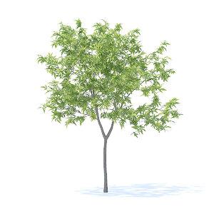 3D peach tree 2 3m
