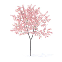 Peach Tree with Flowers 3D Model 2.3m