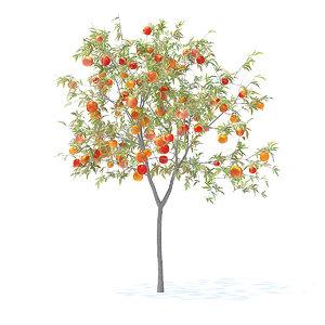 peach tree 2 3m 3D model
