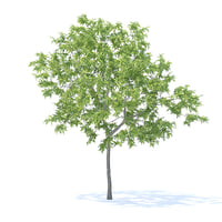 peach tree 3m 3D model