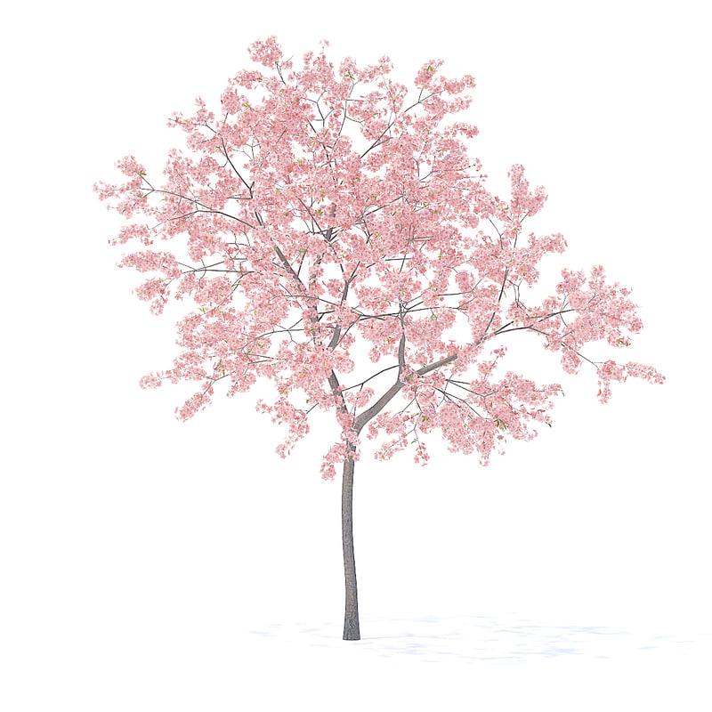 3D peach tree 3m model