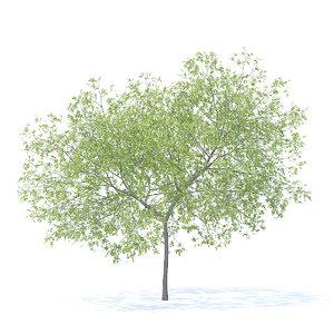 3D peach tree 5 8m