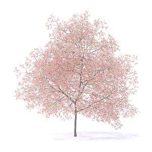 3D peach tree 7 5m model