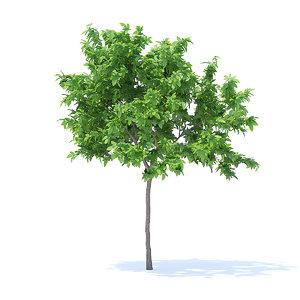 lemon tree 2 4m 3D model