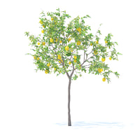 Lemon Tree with Fruits 3D Model 2.4m