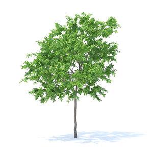 lemon tree 3 1m 3D