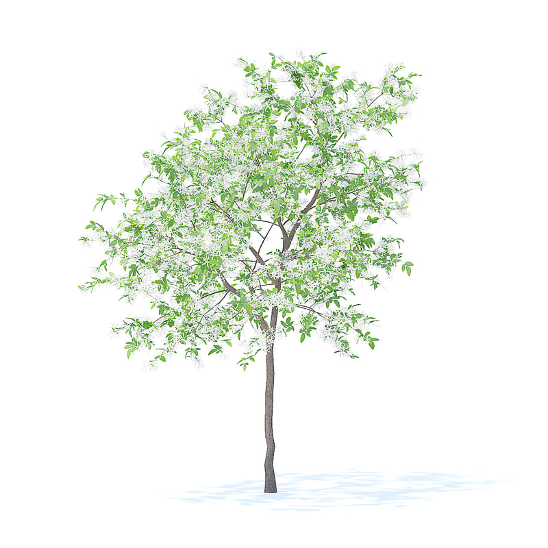 3D lemon tree 3 1m