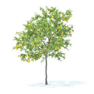 3D model lemon tree 3 1m