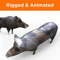 wild boar rigged animation 3D model