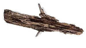 3D model rotten branch wood