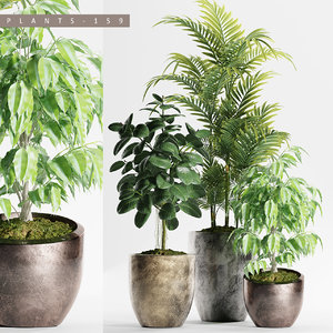 palm plants model