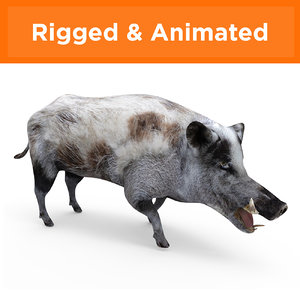 3D wild boar rigged animation model
