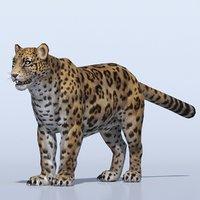 3D leopard ready model