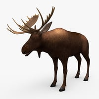 ready moose 3D model