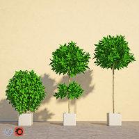 laurus 3D model