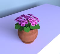 3D home flower geran