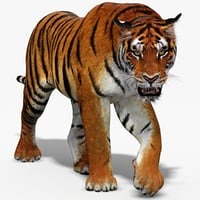 Tiger Amur (Animated)