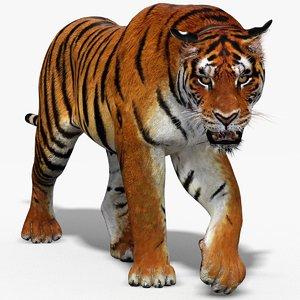 3D tiger animation