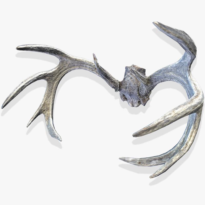 deer horns model