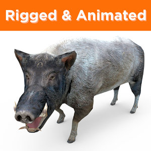 wild boar rigged animation model