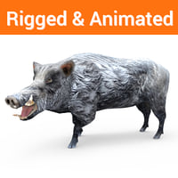 3D model wild boar rigged ready