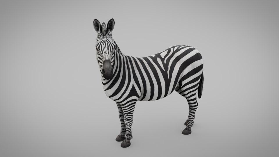 animal zebra model