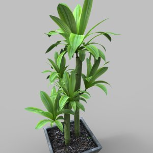 3D tropical plant 3d3 model