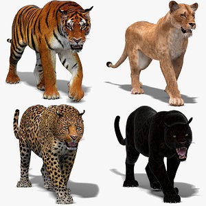 big cats lion lioness 3D