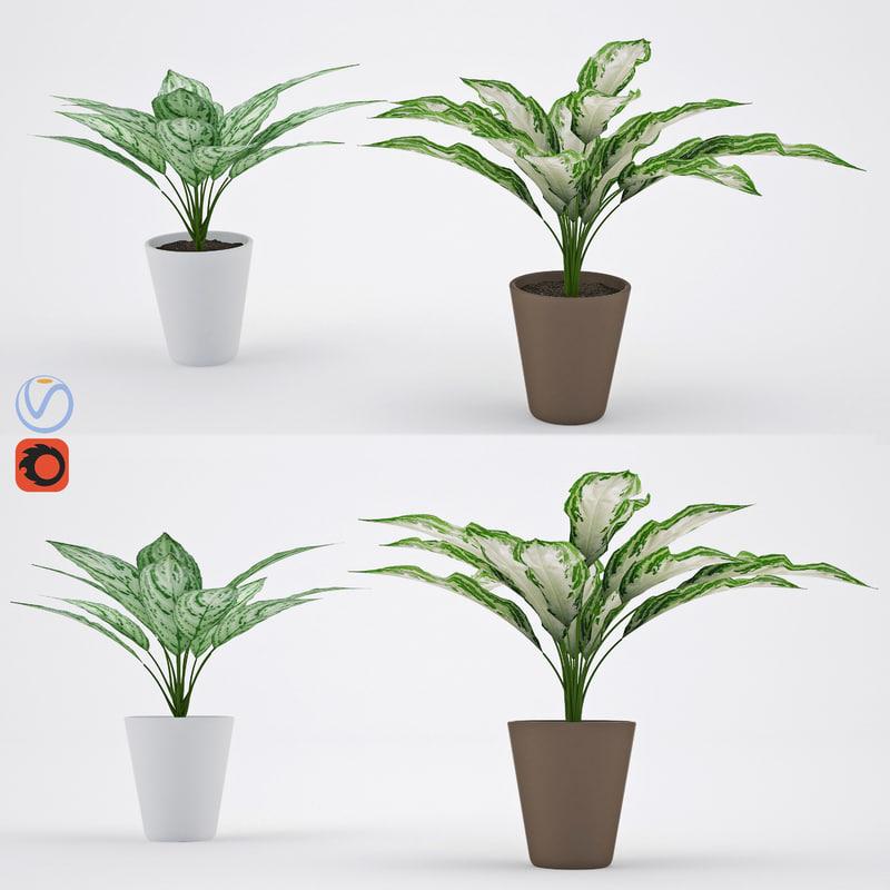 3D model aglaonema