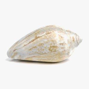 3D model seashell 4