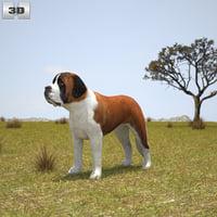 st bernard 3D