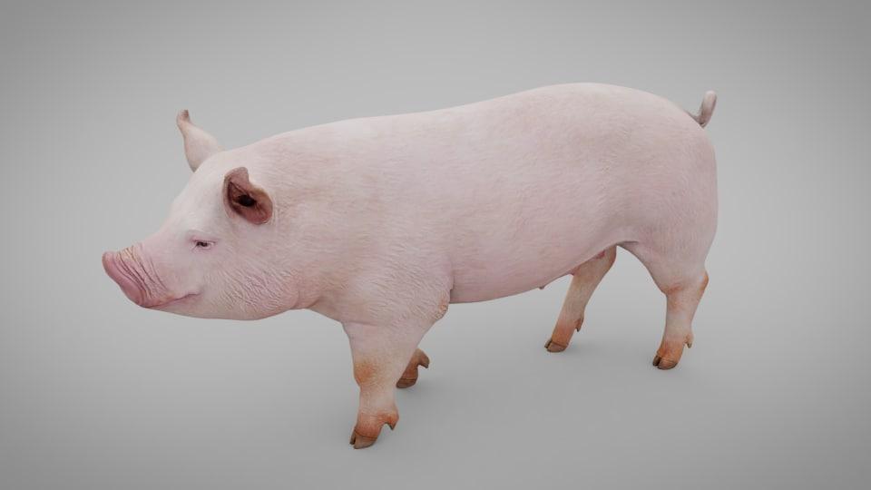 animal pig 3D model