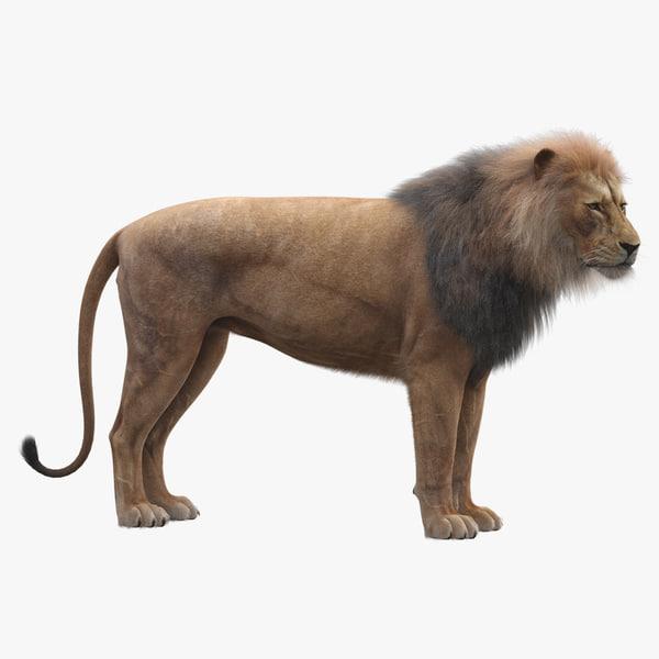 realistic rigged lion fur 3D model